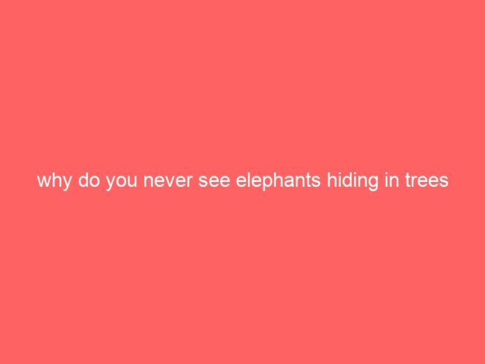 why do you never see elephants hiding in trees 1764