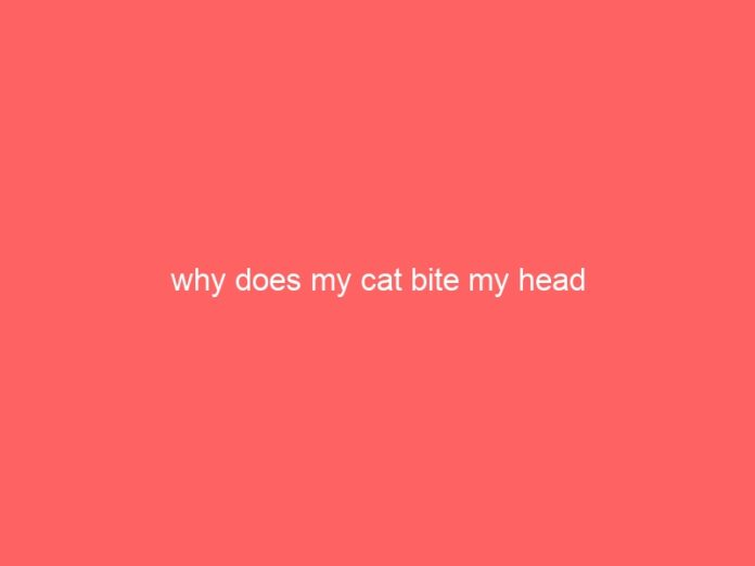 why does my cat bite my head 683